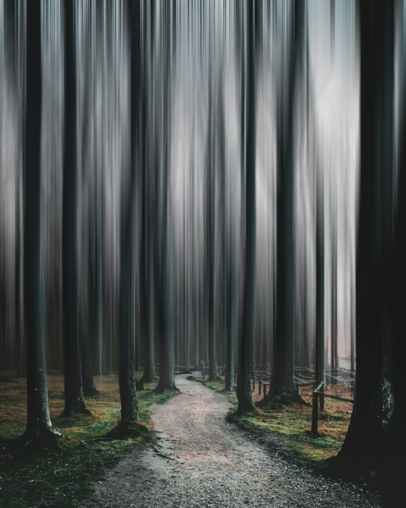 a path in to dark woods